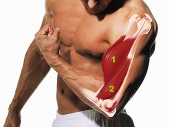 biceps-miesien