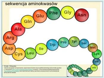sekwencja-aminokwasow