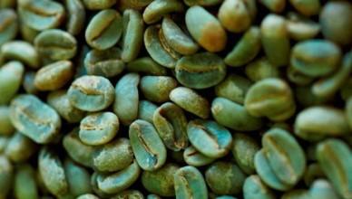 zielona-kawa-kulnaro