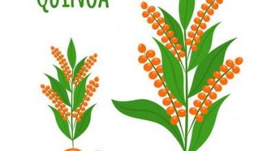 komosa-ryzowa-quinoa