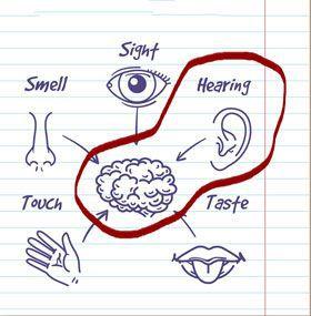 słuch jako ważny narząd