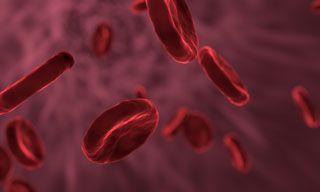 erytrocyty czerwone krwinki
